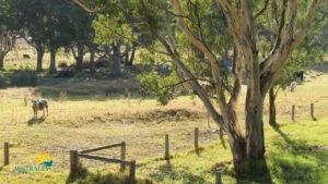 La Australia Rural Necesita Miles de Trabajadores