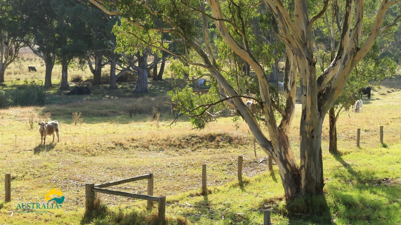 Australia Immigration Agency - Australia Rural